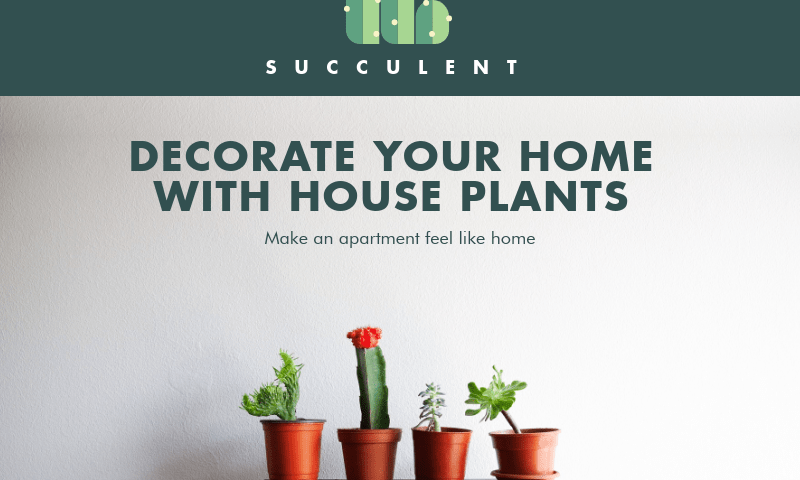 Decorate-your-home-with-house-plants
