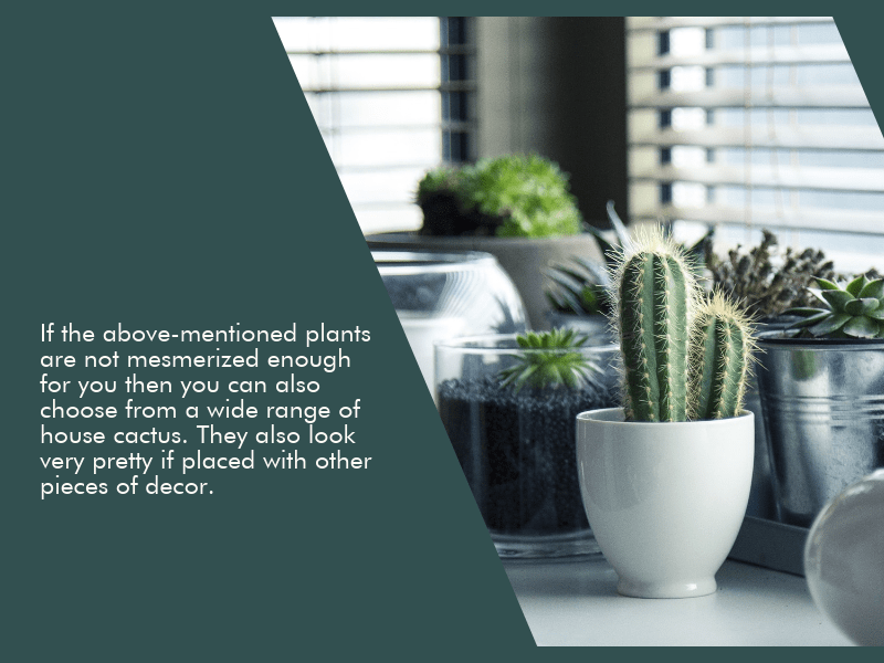 Houseplants-to-beautify-your-home