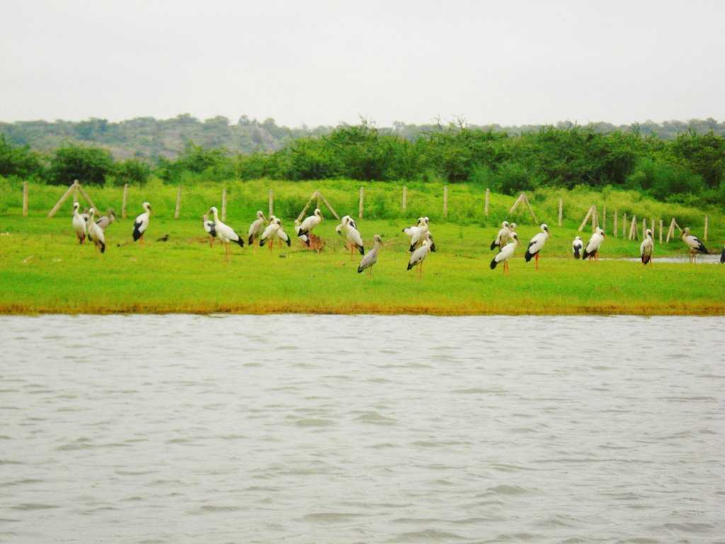 Damdama Lake Gurgaon Roomsoom