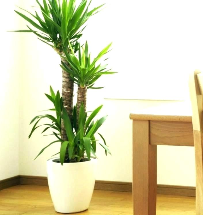 tall potted plants