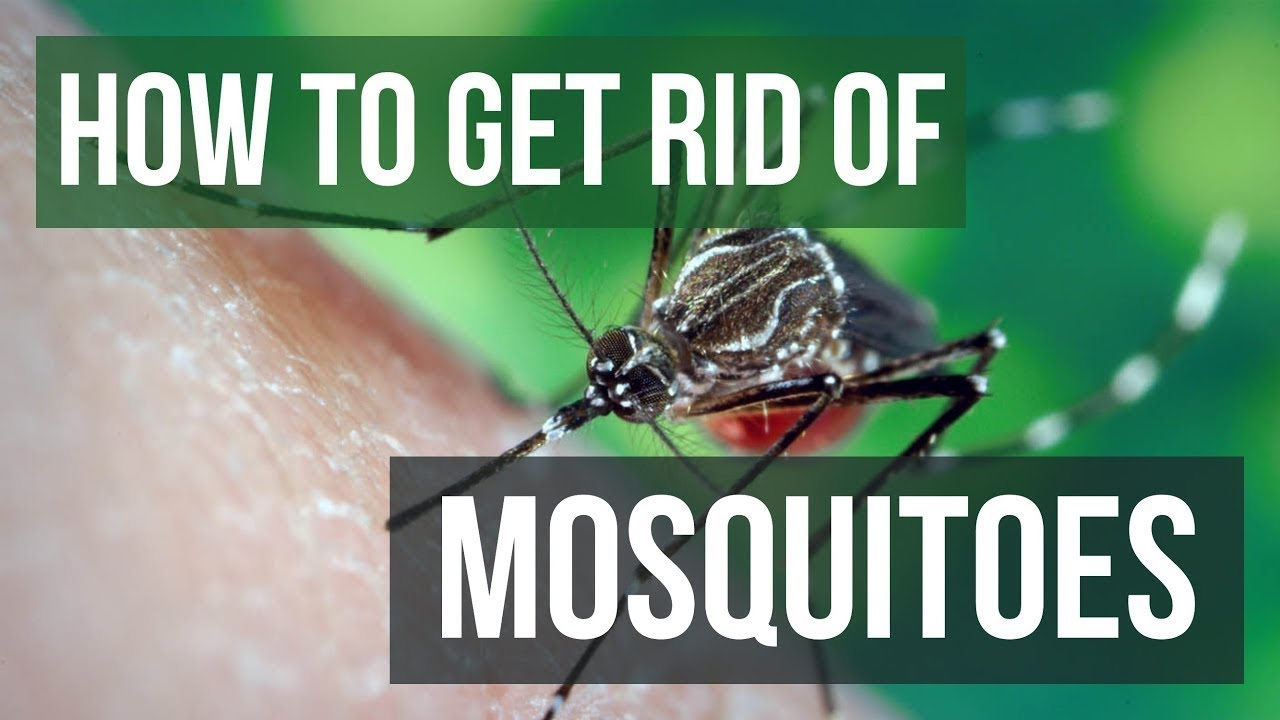 Top 5 sure-shot ways to get rid of mosquitoes